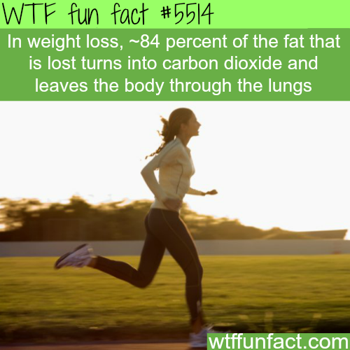 How most of the fat leaves the body - WTF fun facts