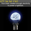 how much electricity in your brain wtf fun facts
