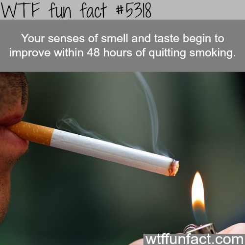 How quitting smoking can improve your body in days - WTF fun facts