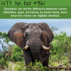 how smart are elephants wtf fun facts