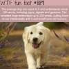 how smart is the average dog wtf fun facts