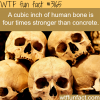 how strong is the human bone