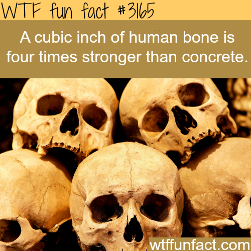 How strong is the human bone? -  WTF fun facts