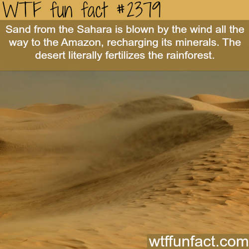 How the desert fertilizes the rainforest -WTF funfacts