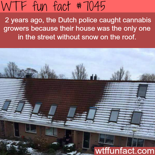 How the Dutch police caught cannabis growers -