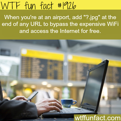 How to access wifi in airport - WTF fun facts