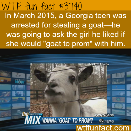 How to ask a girl to prom - WTF fun facts
