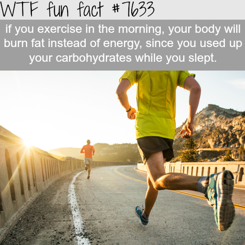 How to lose fat - WTF fun facts