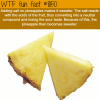 how to make pineapples sweeter wtf fun fact