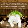 how to make your cat drink water