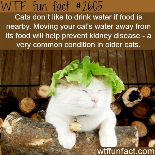 How to make your cat drink water - WTF fun facts