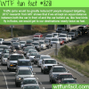 how to reduce traffic jams wtf fun facts