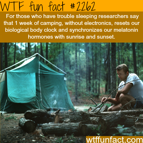 How to solve sleeping problems - WTF fun facts