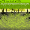 how tree communicate wtf fun facts