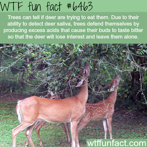 How tree fight off deer - WTF fun facts