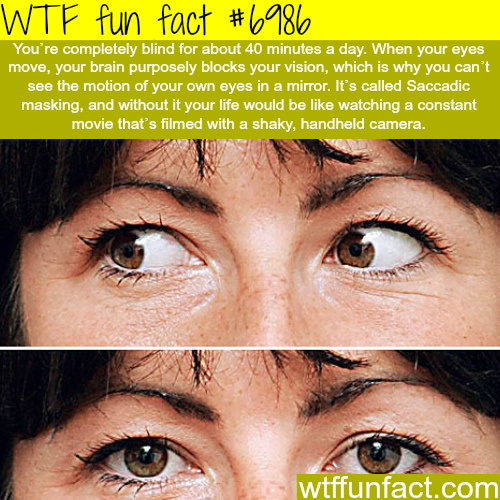 How your brain plays tricks on you - WTF fun fact