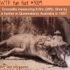 huge 8 meter crocodile shot in australia