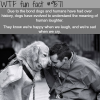 human and dog bond wtf fun fact