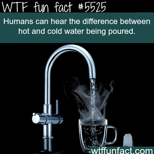 Humans can hear the difference between hot and cold water - WTF fun facts