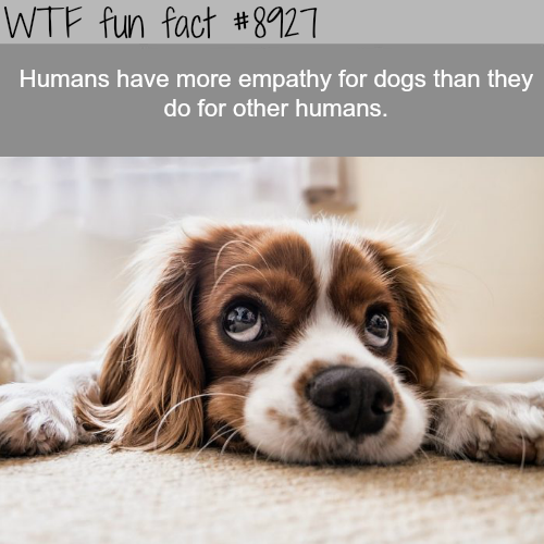 Humans have more empathy for dogs than humans - WTF fun facts