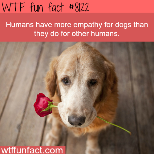 Humans have more empathy for dogs - WTF fun facts