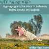 hypnagogia wtf fun facts
