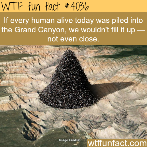 If every human alive today was piled up into the Grand Canyon - WTF fun facts