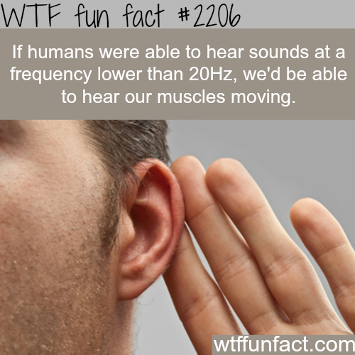 If humans can hear hear sounds at frequency lower than 20Hz - WTF fun facts