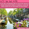 if you die amsterdam with no relatives wtf fun