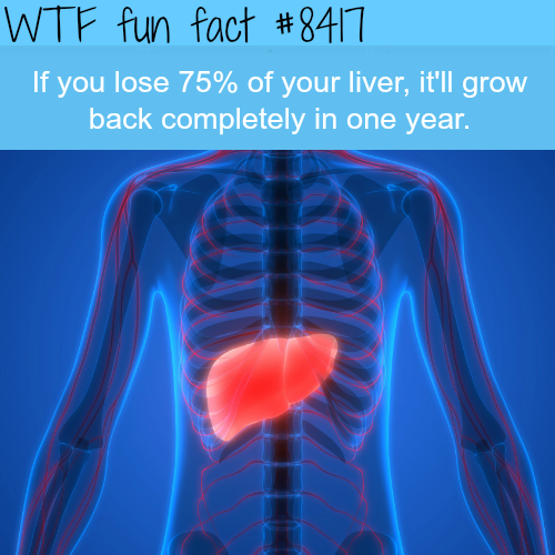 If you lose your 75% of your liver it would grow back - WTF fun facts