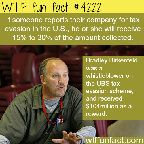 If you report your company for tax evasion
