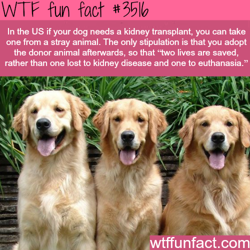 If your dog needs a Kidney transplant in the U.S.A -  WTF fun facts