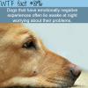 if your dog wont sleep at night wtf fun fact