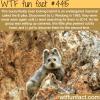 ili pika the bunnyteddy looking hybrid wtf