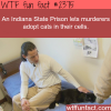 indian state prison let prisoners adopt a cat