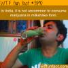 indias marijuana milkshake