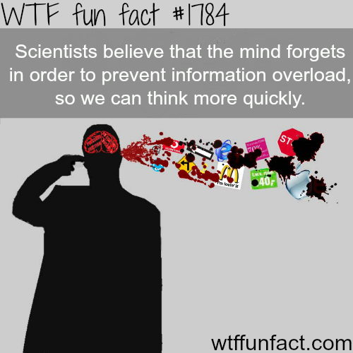 Information overload facts - WTF fun facts