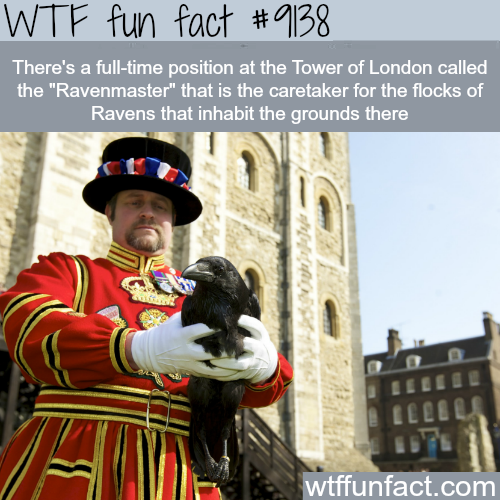 Interesting Jobs: Ravenmaster - WTF Fun Facts