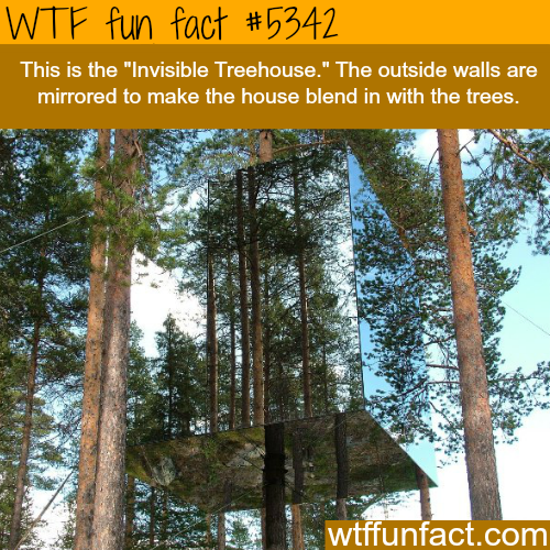 Invisible Tree-house - WTF fun facts