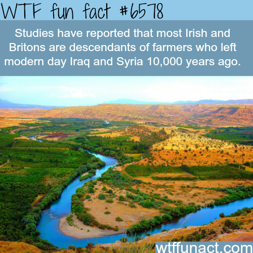 Irish and Britons ancestors - WTF fun facts