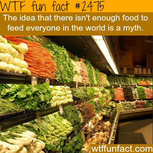 Is there enough food to feed everyone? - WTF fun facts