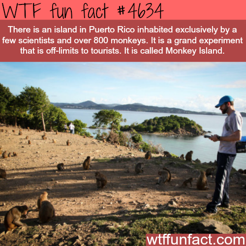 Island in Puerto Rico inhabited only by monkeys - WTF fun facts