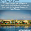 islands made of grass wtf fun facts