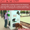 istanbul s awesome vending machines for dogs
