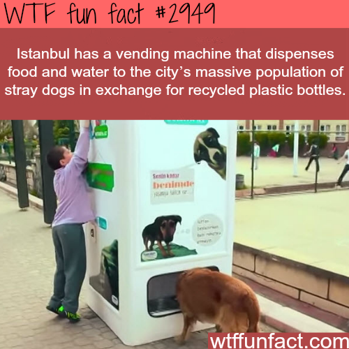 Istanbul's awesome vending machines for dogs -  WTF fun facts
