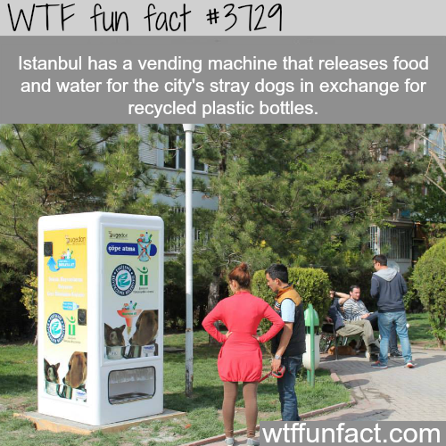 Istanbul's recycling vending machines that feeds dogs - WTF fun facts