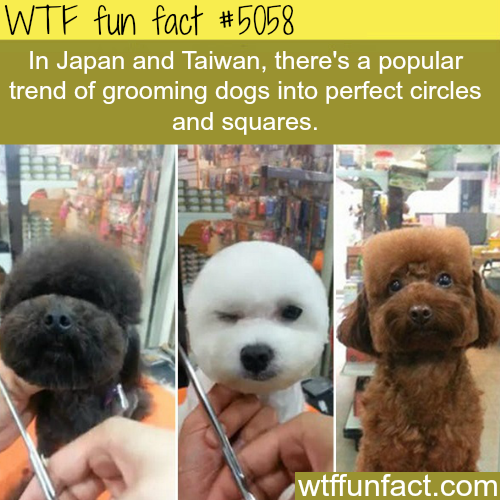 Japan and Taiwan trend of grooming dogs into circles - WTF fun facts