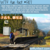 japan keeps a defunct train station for just one