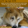 japan now has retirement homes for dogs wtf fun