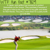 japan weird hole in one tradition wtf fun facts